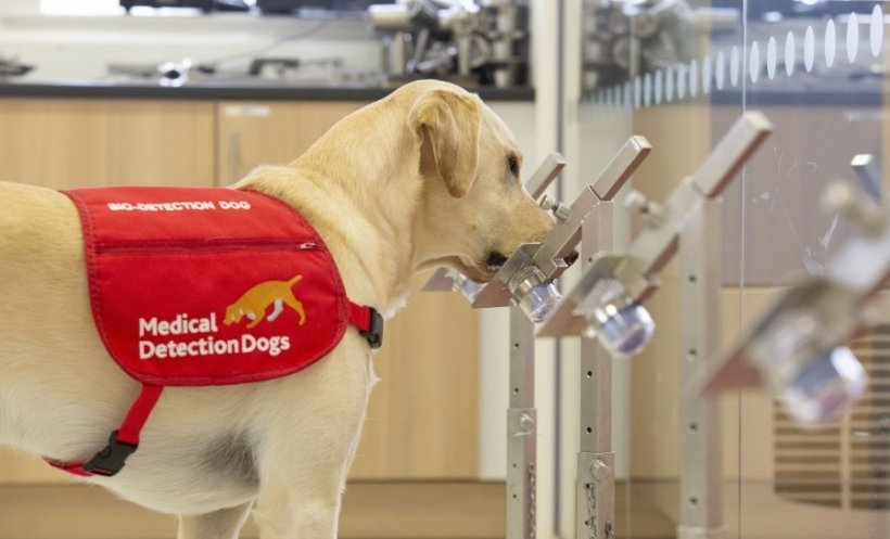SNIFFER DOGS TO BE USED AS COVID-19 DETECTORS - coronavirus sniffing dogs